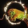 Цирки в Крутихе