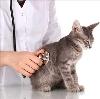 Ветеринарные клиники в Крутихе